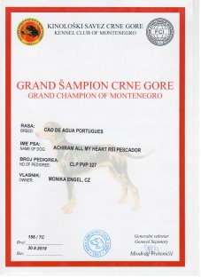 Grandchampion of Montenegro